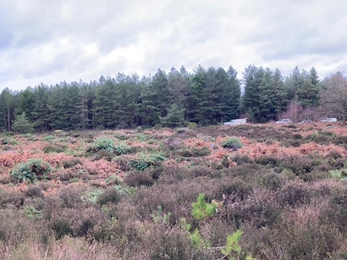 Rendlesham Forest after pine tree removal – Ben Calvesbert