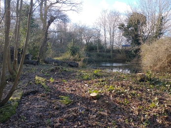 Pond at Gunton Meadow after tree clearance – Ellen Shailes