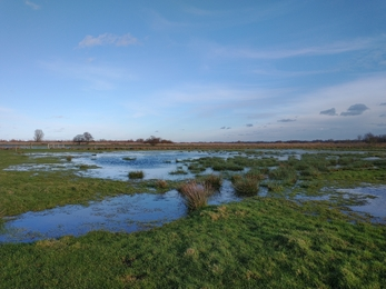 Castle Marshes