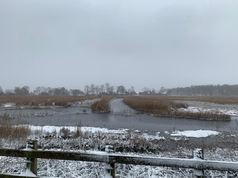 Snow at Hen Reedbeds - Sarah Groves