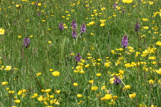 Wildflowers Suffolk Wildlife Trust