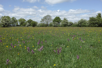 Winks Meadow Suffolk Wildlife Trust