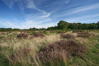 Knettishall Heath uffolk Wildlife Trust