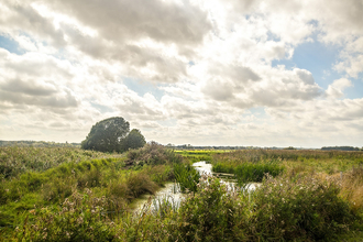 Carlton Marshes by John Ferguson