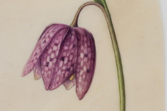 Fritillary by Ruth Wharrier