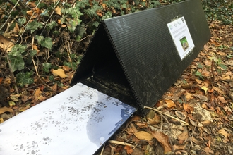 Hedgehog footprint survey