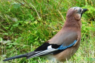 Jay at Lackford