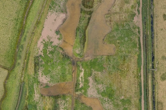 Share Marsh drone image