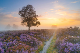 Westleton Heath by Amanda Burgess