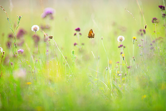 Wildlflowers and butterfly by Jon Hawkins