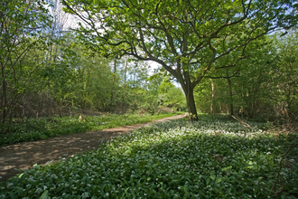 Bradfield Woods courtesy of Steve Aylward