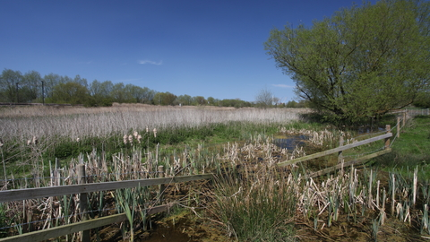 Papermill Reedbed Suffolk Wildlife Trust