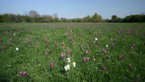 Fox Fritillary Meadow nature reerve