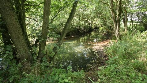 Roydon Fen Nature Reserve | Suffolk Wildlife Trust