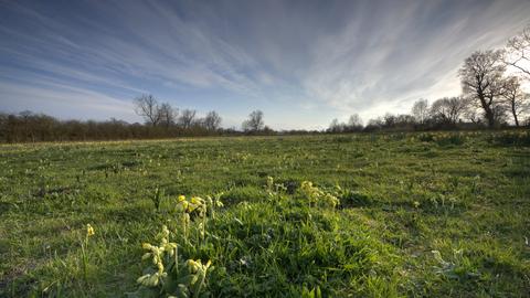 Martins' Meadows Nature Reserve | Suffolk Wildlife Trust