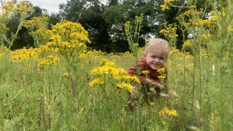 boy in ragwort