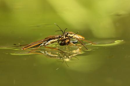 Pond restoration and management | Suffolk Wildlife Trust