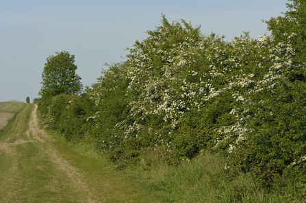 Hedgerow Management Suffolk Wildlife Trust