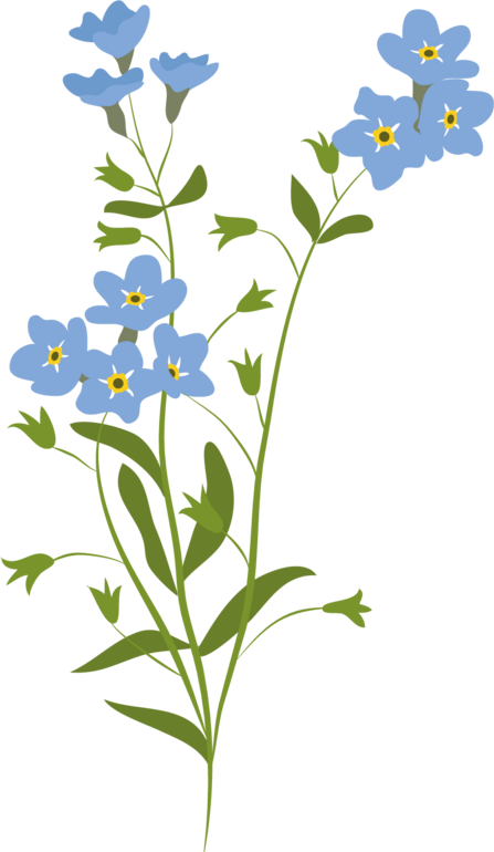 Forget me not illustration