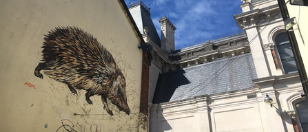 Hedgehog mural in Ipswich town centre by ATM