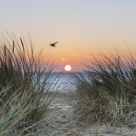 Beach dunes and sunset by Sarah Groves