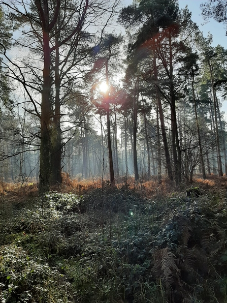 Morning at Knettishall Heath - Kim Wippel