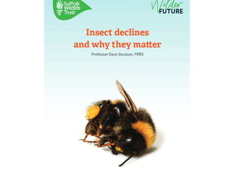Insect declines and why they matter report